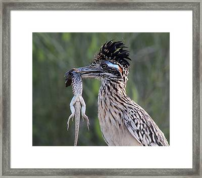 Fool In Love Framed Print