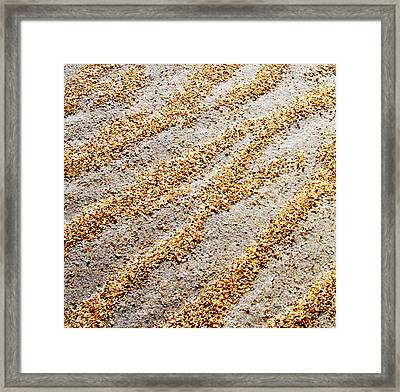Foot Prints  -  Part 1 Of 3 Framed Print by Sean Davey