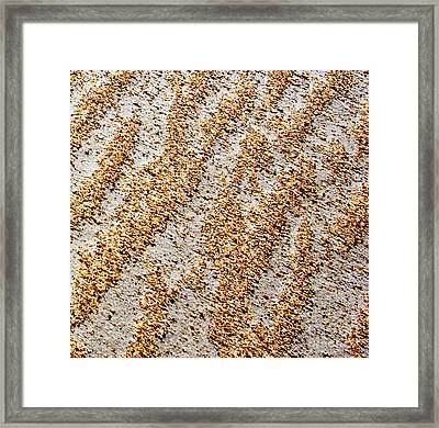Foot Prints  -  Part 3 Of 3 Framed Print by Sean Davey