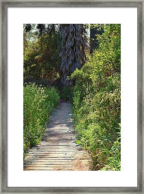 Footpath In Peters Canyon I Framed Print