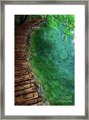 Footpaths And Fish - Plitvice Lakes National Park, Croatia Framed Print
