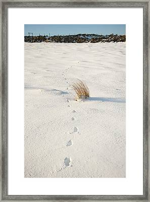 Footprints In The Snow II Framed Print