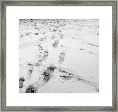Footprints In The Snow Framed Print by Janis Beauchamp