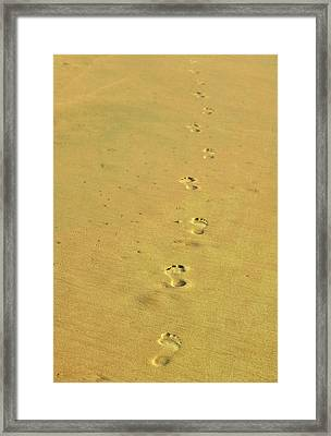 In Search Of Zen Framed Print by JAMART Photography