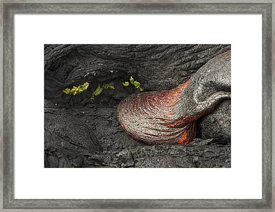 For A Short Time Framed Print by Allen Lefever