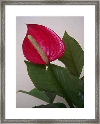 For Danielle II Framed Print by Anna Villarreal Garbis