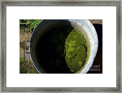 For Dirty Photos   Garden Mash Framed Print by The Stone Age