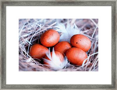 For Every Bird A Nest Framed Print