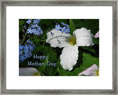 For-get-me-not Framed Print by Deborah Johnson