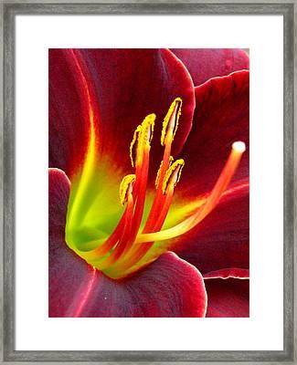 For Joseph Framed Print by Marla McFall