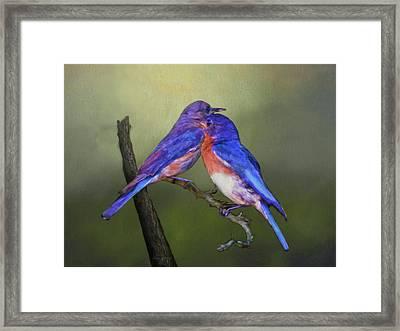 For Love Of Bluebirds Framed Print