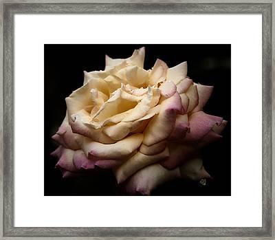 For Rose Lovers Framed Print by Barbara Middleton