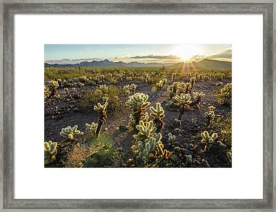Framed Print featuring the photograph Sea Of Cholla by Margaret Pitcher