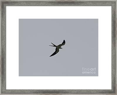 For The Benefit Of Mr Kite Framed Print by William Tasker