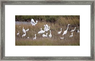 For The Birds I Framed Print by Dawn J Benko