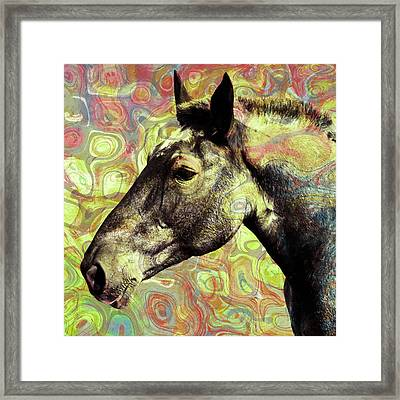 For The Love Of A Horse Framed Print