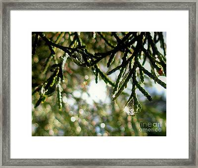 For The Love Of Bokeh 2012 Framed Print