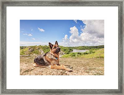 For The Love Of Dogs Framed Print by Colin and Linda McKie