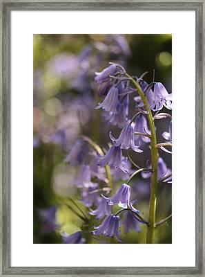 For Thumbelina Framed Print by Connie Handscomb