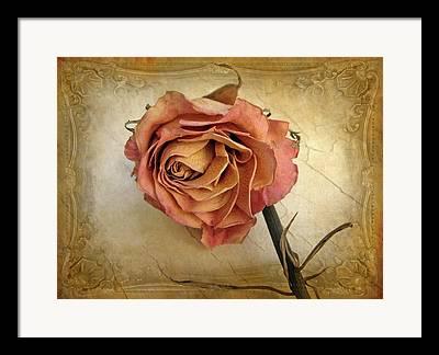 Rose Petals Framed Prints