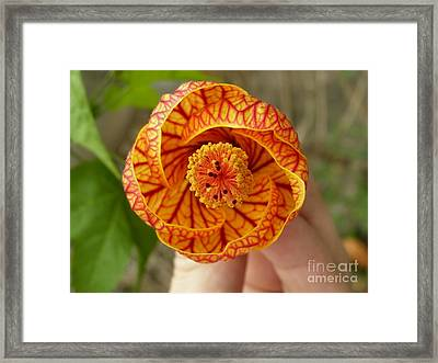 For You Framed Print by Kathy Daxon