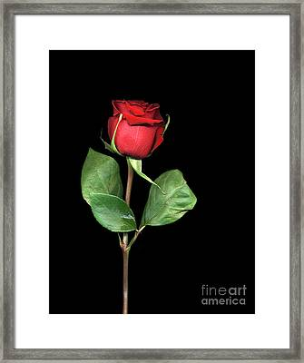 For You My Darling With Love Framed Print