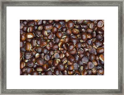 Foraged Sweet Chestnuts Framed Print