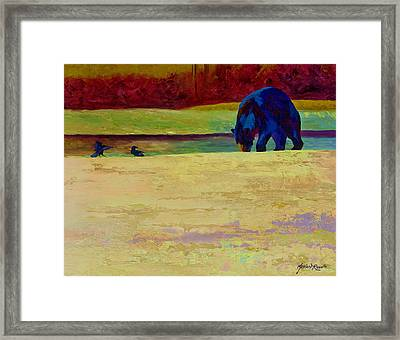 Foraging At Neets Bay - Black Bear Framed Print by Marion Rose