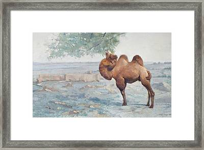 Foraging Framed Print by Chen Baoyi