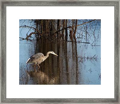 Foraging Framed Print by I'ina Van Lawick