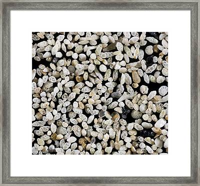 Foraminiferan Tests Framed Print by Power And Syred