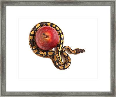 Forbidden Fruit Framed Print by John Mueller