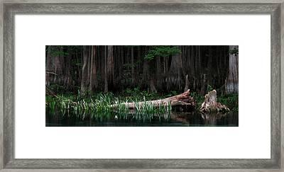 Forbidden Swamp Framed Print by Matt Tilghman