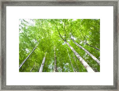 Framed Print featuring the photograph Forest 1 by Jean Bernard Roussilhe