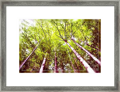 Framed Print featuring the photograph Forest 2 by Jean Bernard Roussilhe