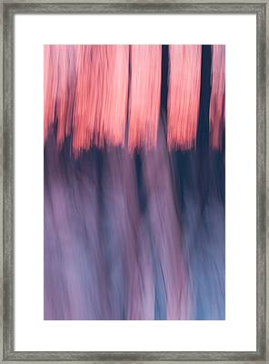 Forest Abstract Framed Print
