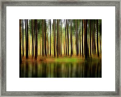 Forest Abstract Framed Print by Svetlana Sewell