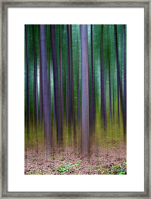 Forest Abstract02 Framed Print by Svetlana Sewell
