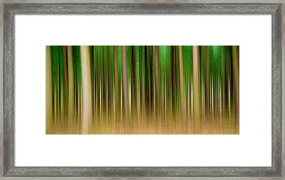 Forest Abstract04 Framed Print by Svetlana Sewell