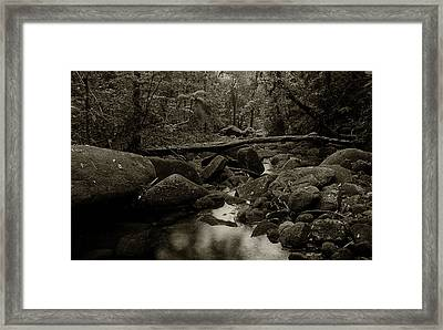 Framed Print featuring the photograph Atlantic Forest by Amarildo Correa