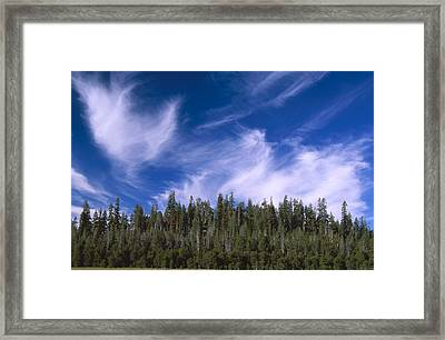 Forest And Sky - Big Dry Meadow Framed Print by Soli Deo Gloria Wilderness And Wildlife Photography