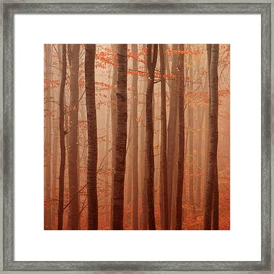 Forest Barcode Framed Print by Evgeni Dinev