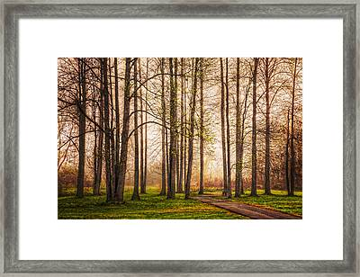 Forest Beauty Framed Print by Debra and Dave Vanderlaan