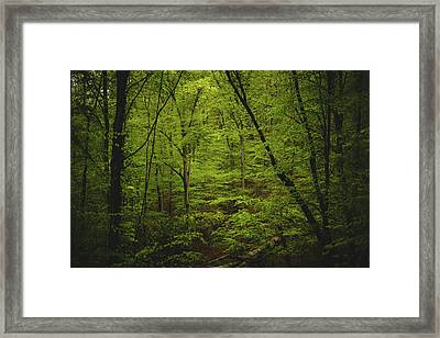 Framed Print featuring the photograph Forest Beckons by Shane Holsclaw