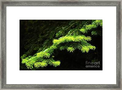 Forest Branch Framed Print