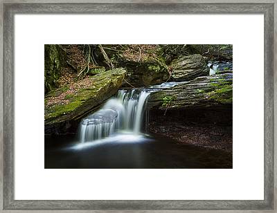 Forest Breeze Framed Print