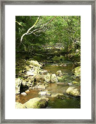Forest Bridge Framed Print by Svetlana Sewell