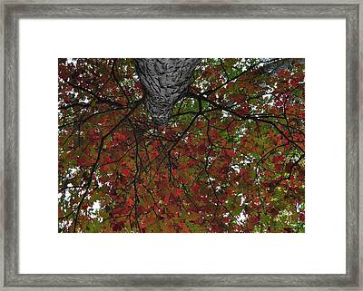 Forest Canopy Framed Print by JAMART Photography