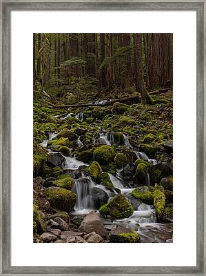 Forest Cathederal Framed Print by Mike Reid