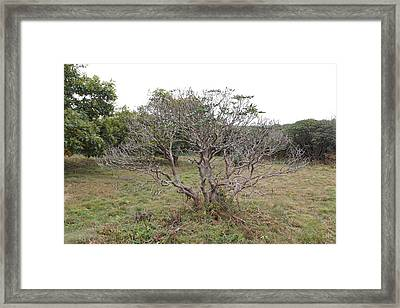 Forest Character Tree Framed Print